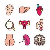 set di icone di parti del corpo e organi educativi vettore