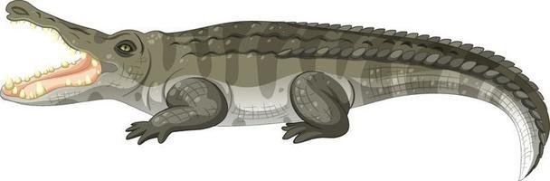 coccodrillo adulto isolato su sfondo bianco vettore