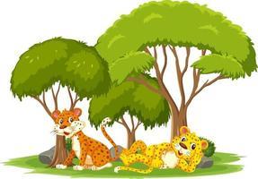 scena isolata con simpatici leopardi vettore