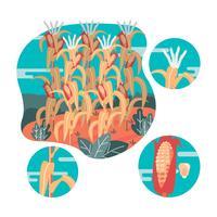 illustrazione di vettore di gambi di mais