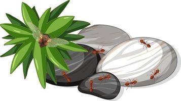 vista dall'alto di molte formiche sulla foglia di pietre isolato vettore