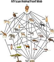 rete alimentare animale africano su sfondo bianco vettore
