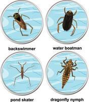 insieme di diversi tipi di insetti acquatici vettore