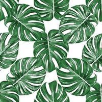 foglia verde monstera senza cuciture su fondo bianco isolato. illustrazione vettoriale acquerello secco disegno a mano stlye. tessuto design texitle