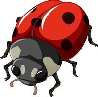 un insetto coccinella su sfondo bianco vettore