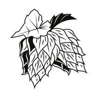 icona di luppolo di birra biologica vettore