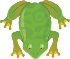 rana verde con gli occhi rossi su sfondo bianco. illustrazione vettoriale di carattere. vista dall'alto