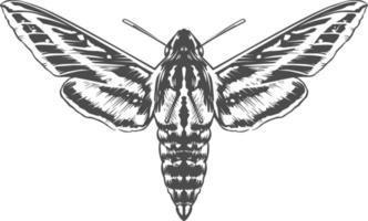 insetto incisione vettoriale