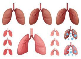 polmoni illustrazione vettoriale design set isolato su sfondo bianco