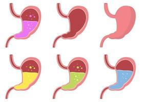 illustrazione di disegno vettoriale di stomaco isolato su priorità bassa bianca