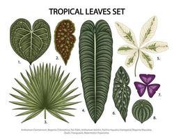 foglie set vettoriale illustrazione botanica, pianta esotica tropicale, fogliame della giungla isolato su sfondo bianco.