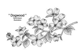 illustrazioni botaniche disegnate a mano del fiore di corniolo vettore