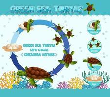 diagramma che mostra il ciclo di vita della tartaruga vettore