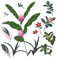 set di bellissimi fiori tropicali e foglie