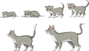 fase di crescita del gatto su sfondo bianco vettore