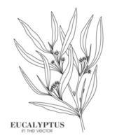 schizzo di un ramo di eucalipto su sfondo bianco vettore