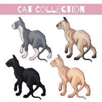 set di gatti senza pelo di diversi colori vettore