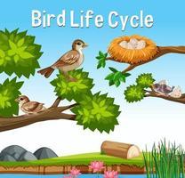 scena con ciclo di vita degli uccelli vettore