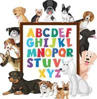 az bordo alfabeto con molti diversi tipi di cani vettore