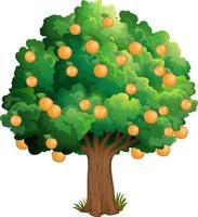 arancio isolato su sfondo bianco vettore