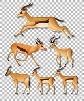 set di diversi lati di impala isolato vettore