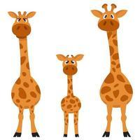 vista frontale della famiglia della giraffa. vettore
