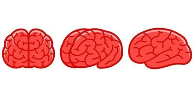 cervello umano in diverse angolazioni impostate vettore