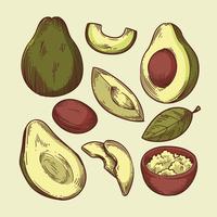 Vettori di avocado