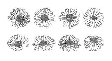 raccolta di margherita fiore con inchiostro stile vettoriale