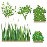 insieme di erba e cespuglio vettore