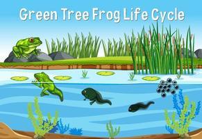 ciclo di vita della rana verde vettore