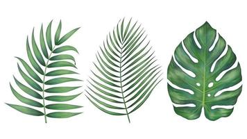 belle foglie tropicali realistiche vettore