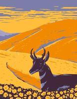 pronghorn e fiori selvatici che crescono nella prateria nativa di carrizo plain monumento nazionale a san luis obispo county california wpa poster art vettore