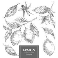 set di illustrazioni vettoriali disegnati a mano di limone