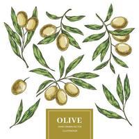 raccolta di elementi di oliva vettore
