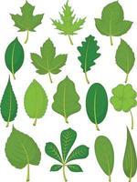 foglie verdi primavera estate foresta organica fogliame illustrazione dei cartoni animati vettore