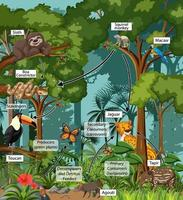 diagramma che mostra la rete alimentare nella foresta pluviale vettore