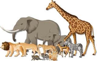 gruppo di animali selvatici africani su sfondo bianco vettore