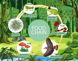 concetto di diagramma della catena alimentare sullo sfondo della foresta vettore