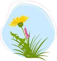 vettore primavera composizione di tarassaco giallo, foglie e cavalletta rosa su sfondo blu.