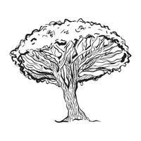 albero del sangue di drago vettore