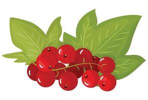 un ramo di ribes rosso maturo, isolato su uno sfondo bianco. belle bacche succose. elemento di design di utensili da cucina. illustrazione vettoriale