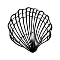 conchiglie. illustrazione vettoriale disegnato a mano nello stile di abbozzo.