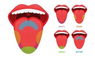 lingua umana aree di gusto di base. vettore