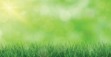 erba verde lussureggiante illuminata dal sole - vettore