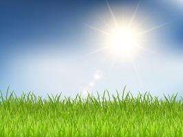 Erba e cielo blu soleggiato vettore