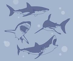 una raccolta di varie azioni di squali. illustrazioni di disegno vettoriale stile disegnato a mano.
