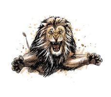 ritratto di un leone che salta da una spruzzata di acquerello, schizzo disegnato a mano. illustrazione vettoriale di vernici