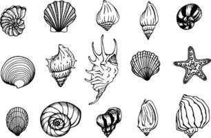 insieme di vettore di conchiglie e stelle marine. sfondo marino. illustrazioni disegnate a mano della linea incisa. perfetto per saluti, inviti, produzione di carta da regalo, tessuti, web design.