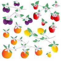 set di frutta mele pesche limoni prugne. illustrazione vettoriale per cartoline, stampa su tessuto o stoviglie, per modelli.